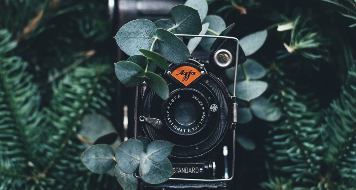 Can You Shoot a Film With a Cheaper Alternative Video Camera?